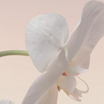 Двери Океан стекло Орхидея